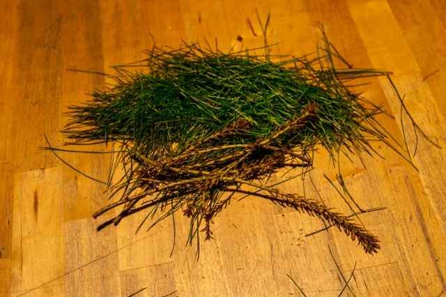 Pine needle cider (1)