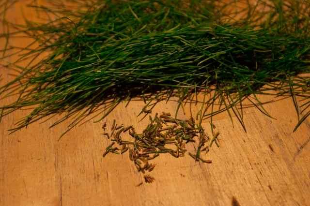 Pine needle cider (3)