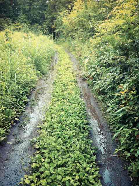 backhoe (7)