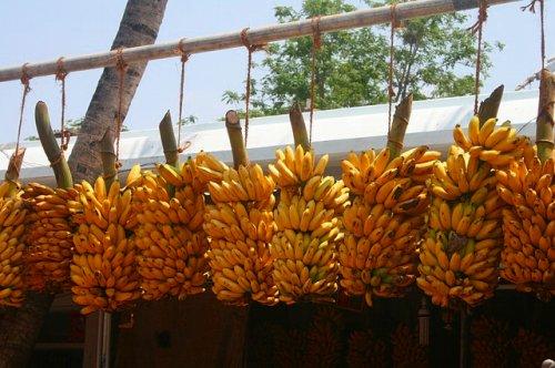 バナナの販売 南インド