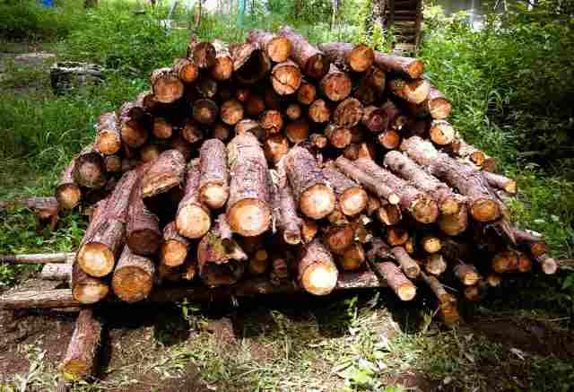 firewood (10)