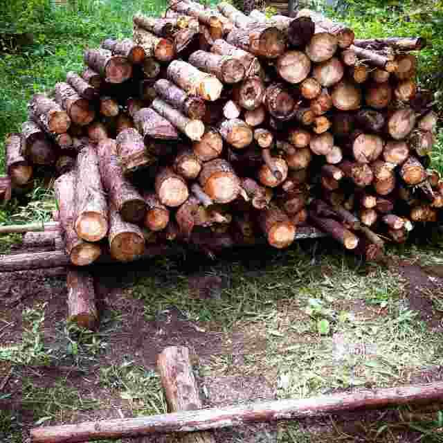 firewood (11)