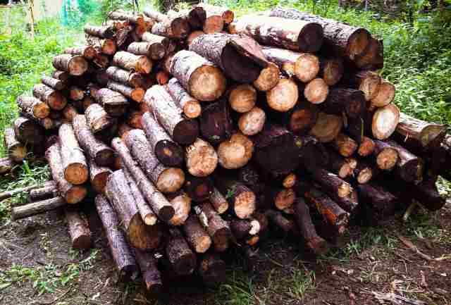 firewood (13)