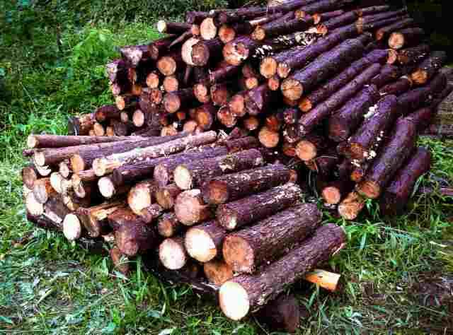 firewood (14)