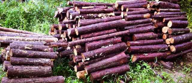 firewood (15)