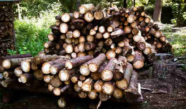 firewood (26)