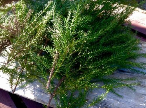 杉の枝を補給