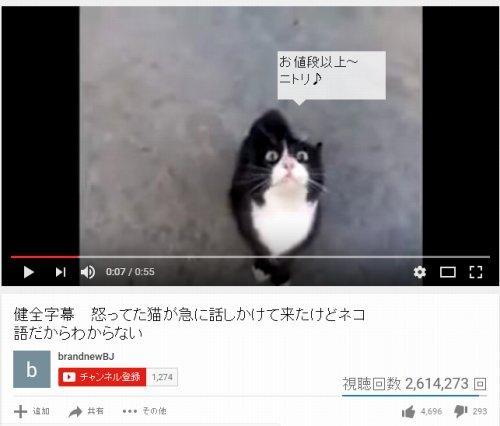 translation_nitori