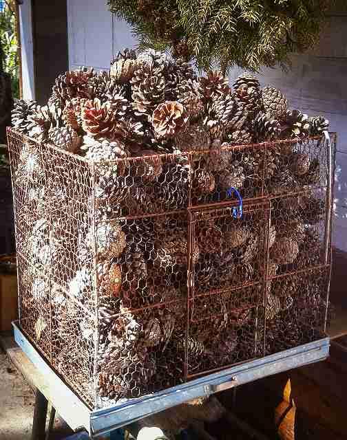 firewood59
