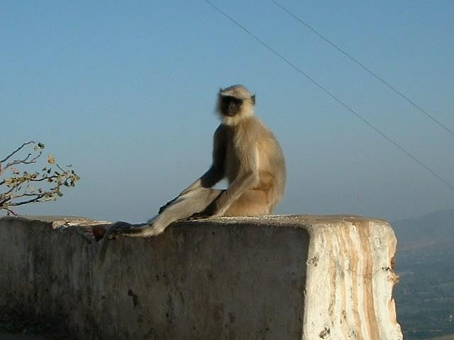 Monkey (13)