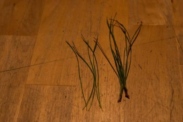 Pine needle cider (2)