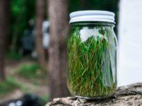 [天然酵母][レシピ]松の葉サイダー