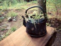 夏の細々とした家の仕事|DIYクイズ編|おまけ:庭の植物