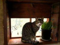 [セルフビルドの小屋][DIY][2/2]南向き窓を[猫用出窓]に作り替える|タイニーハウスの作り方