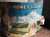養蜂家さんに聞いた、ニホンミツバチのはなし