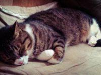 [動物と小屋で暮らす]猫のこと。