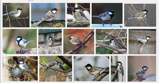 chickadee (1)