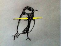 [四十雀まとめ][完結]最後の一匹、四十雀の雛が巣立たない…