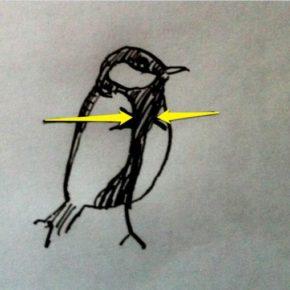 chickadee (11)