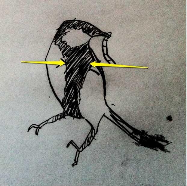 chickadee (12)