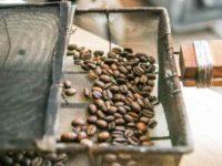 まんがでよくわかるシリーズ:コーヒーのひみつ|自然に触れるとコーヒーが飲みたくなる!?