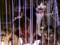 [セルフビルドの小屋][入植17日目] - 荷物の搬入[入植18日目] - 猫と一緒に引っ越し[最終日] - マンション明け渡し|タイニーハウスの作り方
