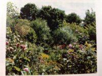 隠れ家的なご近所さんの庭を見に行ったらすごくてびっくりしたときのこと
