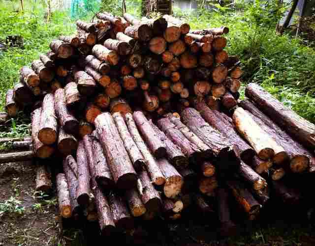 firewood (12)