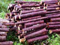 [薪ストーブ][越冬準備]ヒノキの間伐材を手に入れ暖をとる[針葉樹の薪]