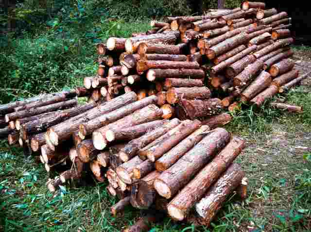 firewood (16)