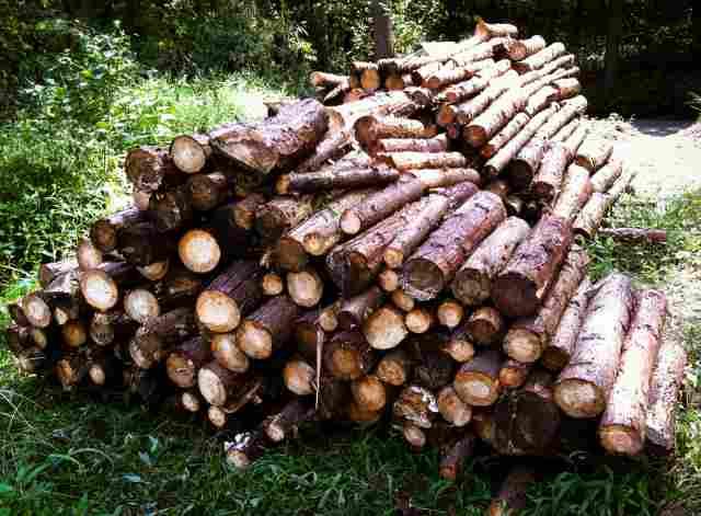 firewood (17)