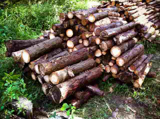 firewood (18)