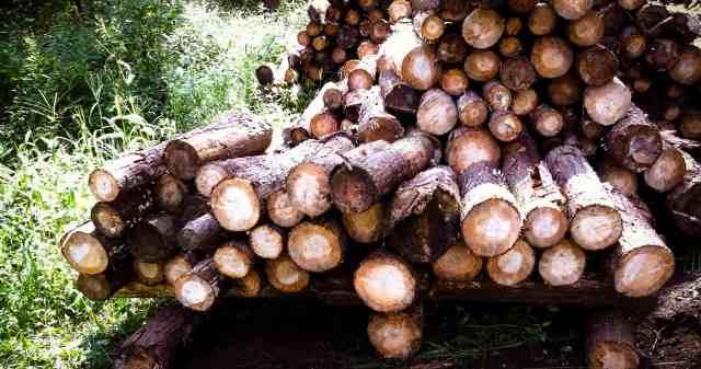 firewood (22)