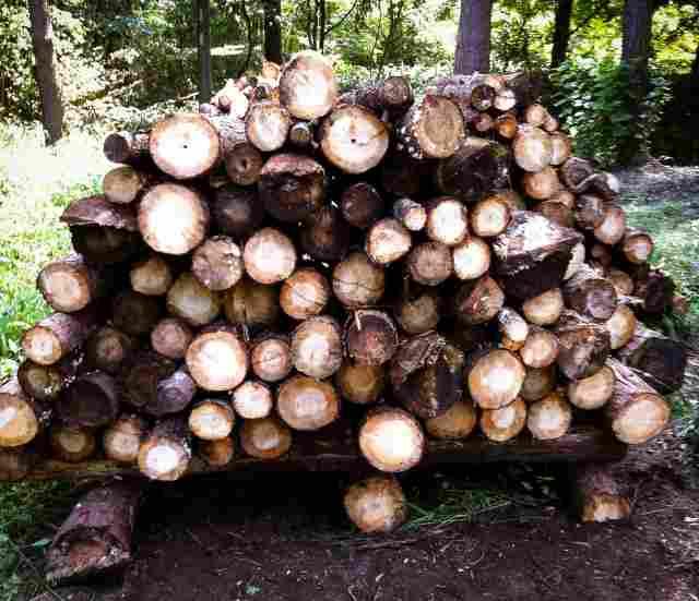 firewood (23)