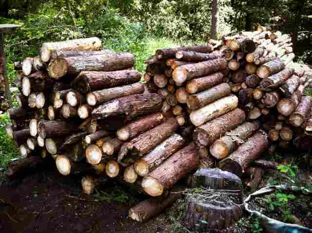 firewood (25)