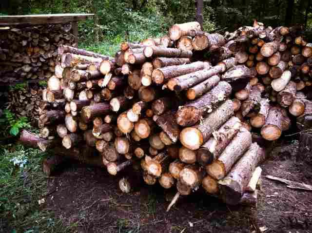 firewood (27)