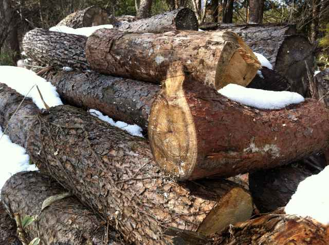 firewood (4)