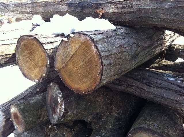 firewood (5)
