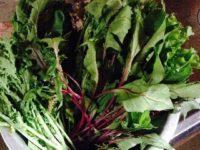 夏でも!葉物の野菜を冷蔵庫なしで保存する方法としなびた野菜を復活させる法