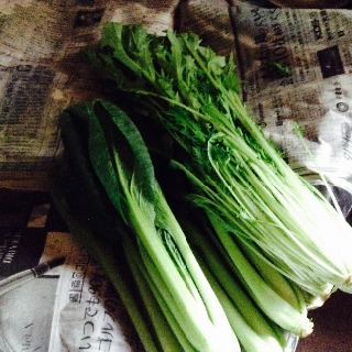 葉物野菜の保管法