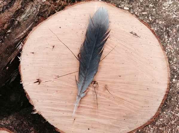 カラスの羽根