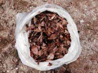 米ぬかと落ち葉で作る堆肥と苗床