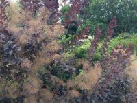 笹を抜いた庭に多年草を植えてみた→1年後の様子
