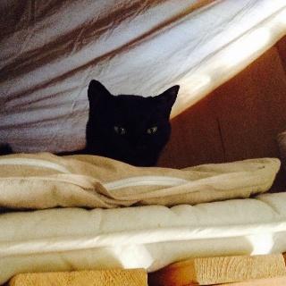 ベッドでくつろぐクロ(ネコ)