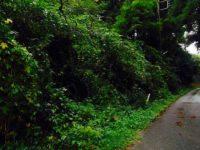 小屋暮らしの土地さがし:その7(栃木編・公売の山林物件めぐり)|タイニーハウスに暮らしたい