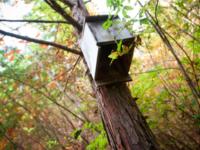 野澤一|日本のソロー・野澤一の詩と人生|森の詩人|100年前の小屋暮らしと四尾連湖探訪