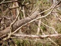 [自然災害]天変地異が怖い|嵐の爪痕