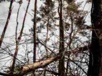[伐木と命]伐木技術を学ぶのは何のため?