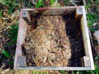 土着菌のはんぺんで発酵促進!の予定でしたが