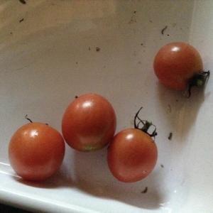 ネパールトマト